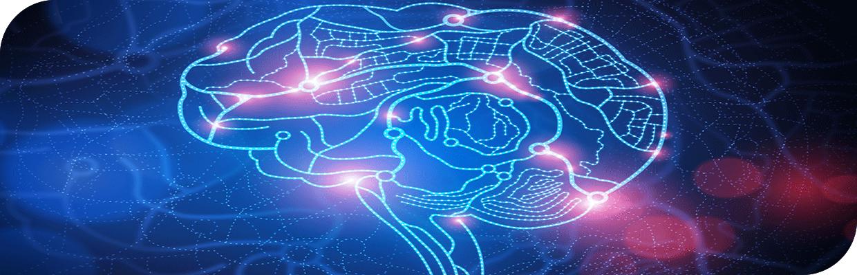 سازمان-مغز