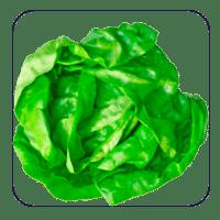 مواد غذایی مفید برای سلامت چشم